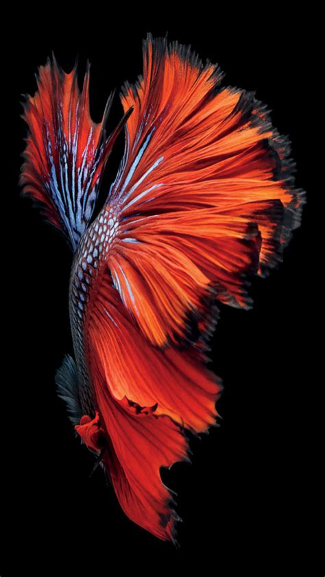 wallpaper for iphone fish iphone 6s still wallpaper images