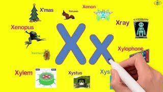 """palabras en ingles que empiezan por la letra """"x"""" el"""