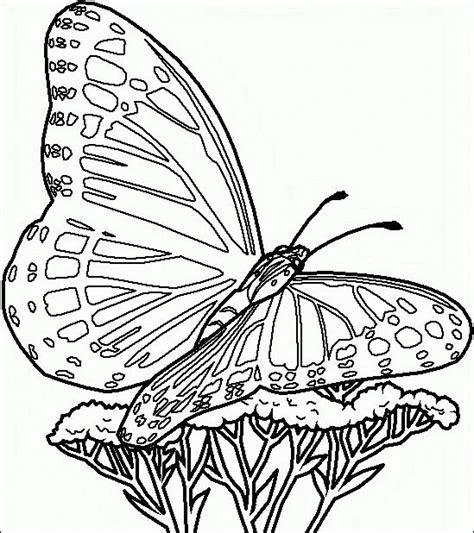 disegni da colorare farfalle e fiori farfalle da colorare disegni gratis