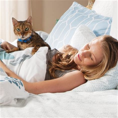 stop cat from peeing on bed why cats potty on beds petsafe 174 articles