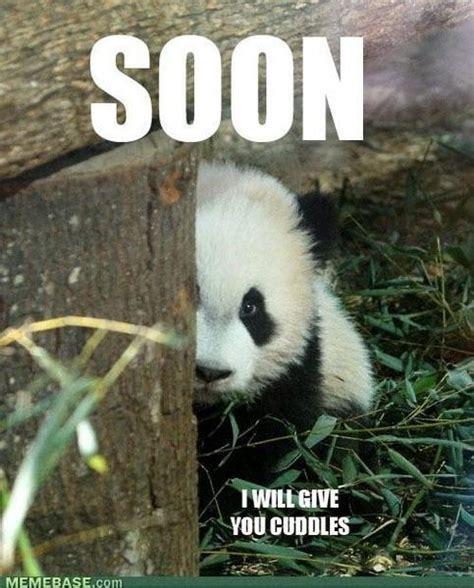 Pick Up Line Panda Meme - pinterest discover and save creative ideas