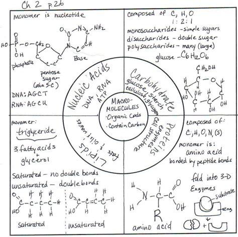 carbohydrates webquest answers organic macromolecules worksheet worksheets releaseboard