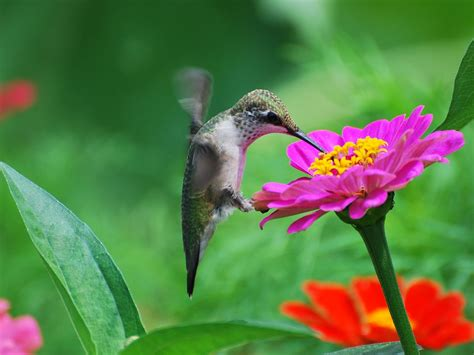banco de fotos profesionales bird and flower wallpaper wallpapersafari