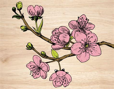imagenes flores de cerezo como dibujar cerezo imagui