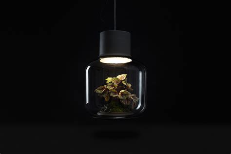 plants that grow in dark rooms self contained ecosystems amazing light fixtures with