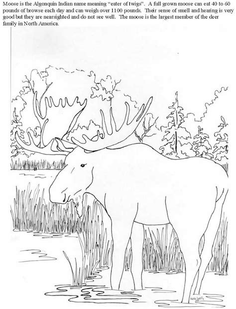 realistic deer coloring pages free coloring pages of realistic deer