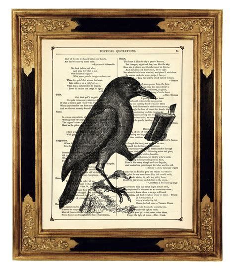 the of all crows the book in the map of unknown things 1map of unknown things books reading book animal history