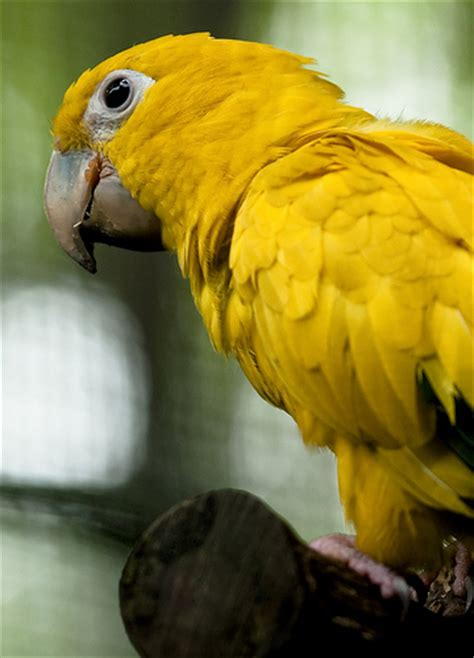 photo gallery of houston parrots for sale