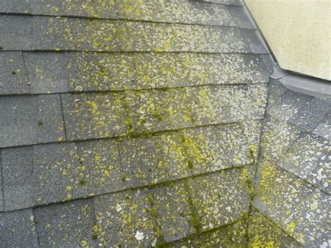 roof algae removal