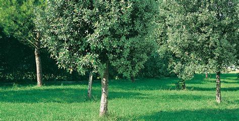 alberi giardino alberi ecco quali scegliere per un giardino ricco