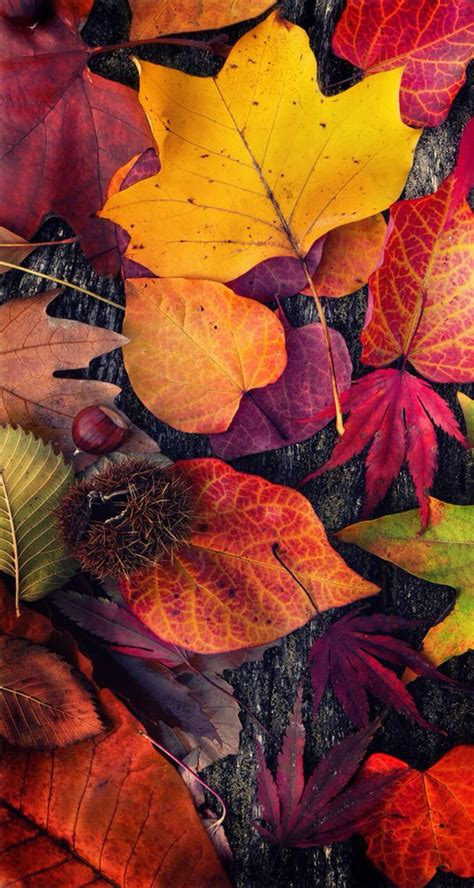 colorful thanksgiving wallpaper wallpaper fall 89 wallpapers 3d wallpapers