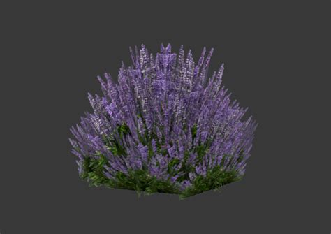 Lavenda Maxy Gamis low poly lavender 3d model low poly cgtrader