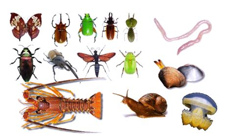 imagenes sorprendentes de animales extraños reino dos animais os invertebrados