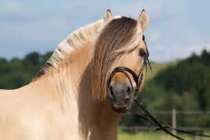 Styles Of Homes 10 Strange And Beautiful Horse Breeds Mnn Mother
