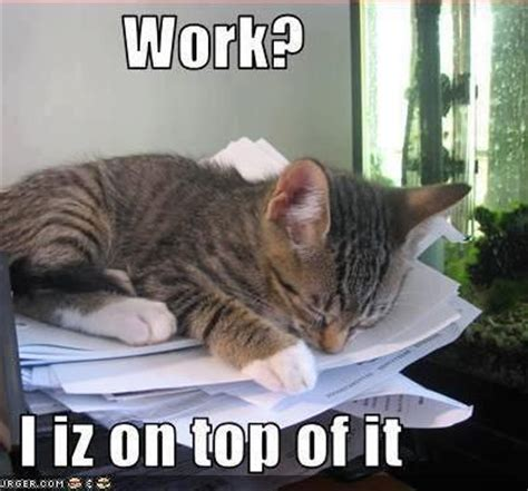 Working Cat Meme - work i iz on top of it lolcats pinterest