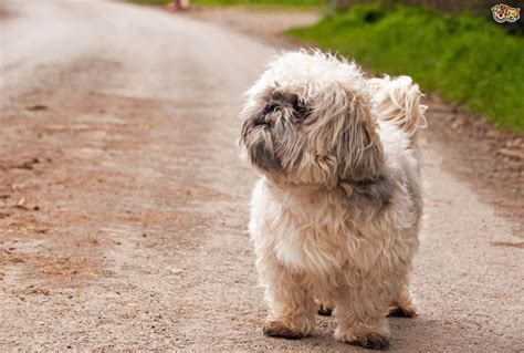 popular dogs 10 of the most popular small breeds within the uk pets4homes