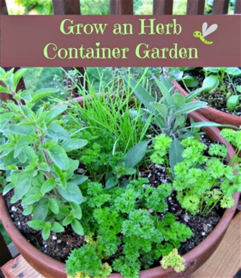 how to grow a herb garden how to grow an herb container garden moms need to know