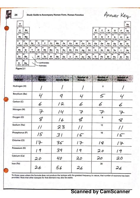 biol 101 121 periodic table worksheet key