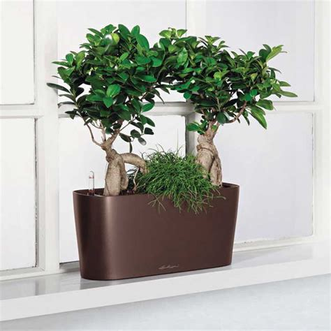 indoor window planter lechuza white all in one delta self watering windowsill