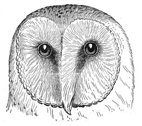 owl head coloring page foto foto temari colouring pages