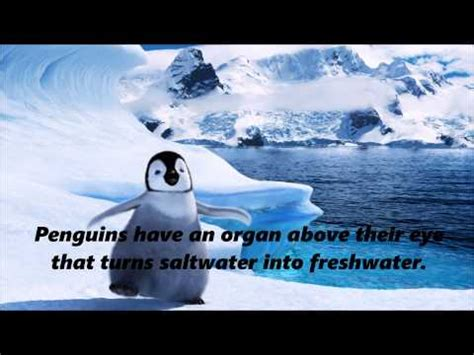 penguin facts for exciting facts about penguins facts about animals volume 18 books interesting facts about penguins