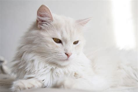 difference  cat hair  fur