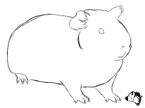 coloring page of a guinea pig sketch drawing from guineapig town would make a cute