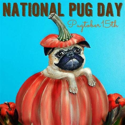 when is national pug day national pug day nationalpugday