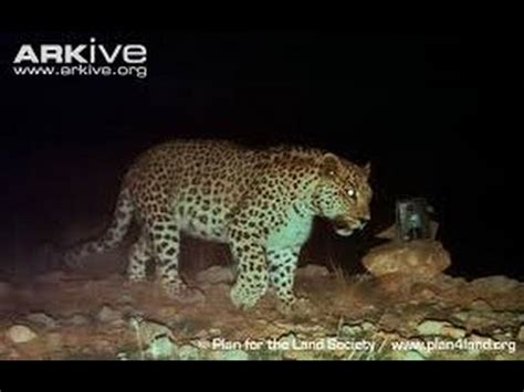 top 10 most dangerous nocturnal animals in africa by top