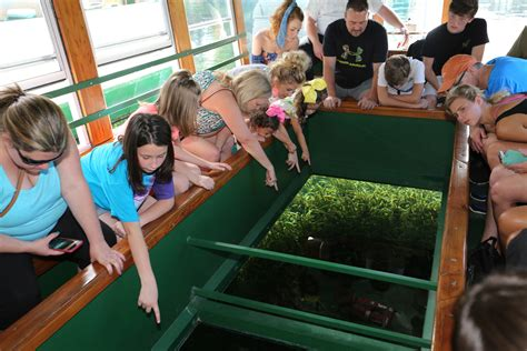 glass bottom boat tours in florida glass bottom boat tours florida state parks