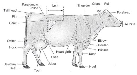 public area in body parts livestock tests and study guides pueblo county