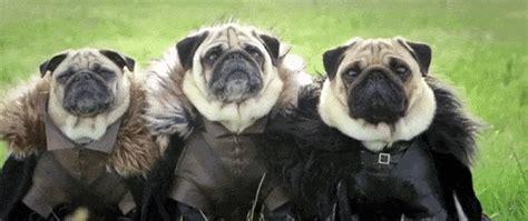 pugs talking pug jokes