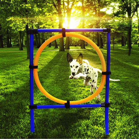 backyard dog agility course dog training jump hoop pet cat outdoor games exercise