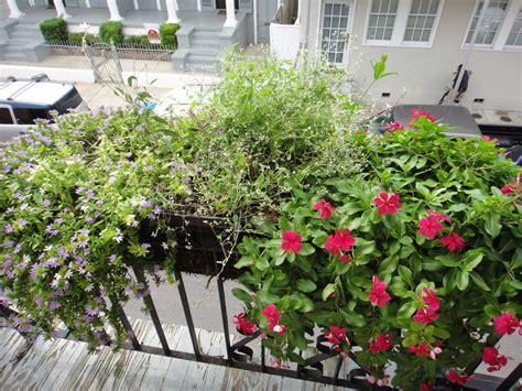 come coltivare fiori piante balcone idee per il design della casa