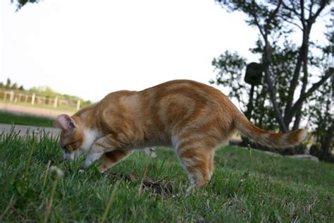 how to get rid of cats in backyard how to get rid of cat urine smell in the house or yard mega bored