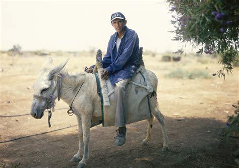 mujer es cogida por un burro las mejores fotograf 237 as de yaakov israel en alcobendas