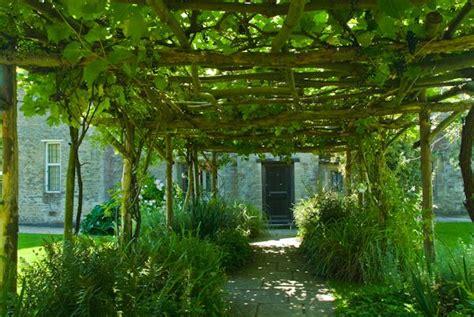 pergola with vines