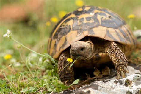 tartarughe terra alimentazione tartaruga di terra animal monza