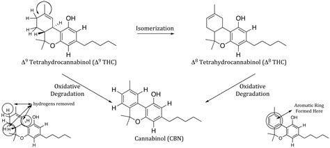 Biosynthesis and Degradation of Cannabinoids Part 2: THCV