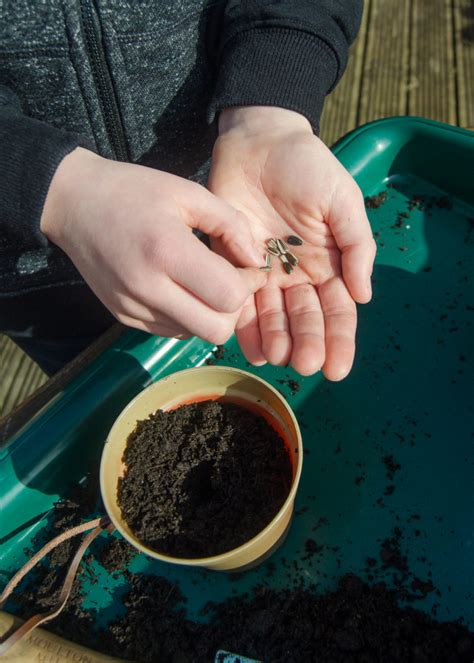 Taking The Rspb Wild Challenge Spotting Signs Of Spring Planters Sunflower Seeds