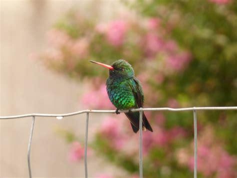 imagenes de aves asombrosas top los p 225 jaros m 225 s lindos de la capital argentina