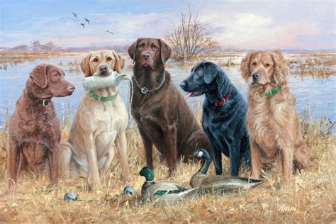 duck dogs duck backgrounds wallpaper cave