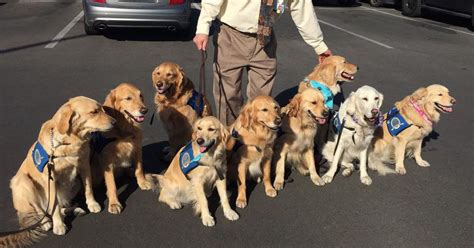 comfort pets law comfort dogs are helping people with the trauma of the las