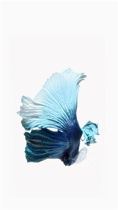 wallpaper iphone 6 fish 15 free iphone wallpapers to set as background
