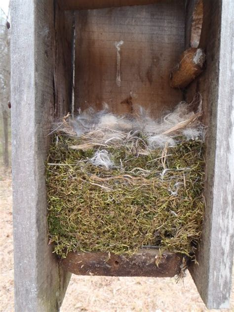 nest box natural lands trust page 2
