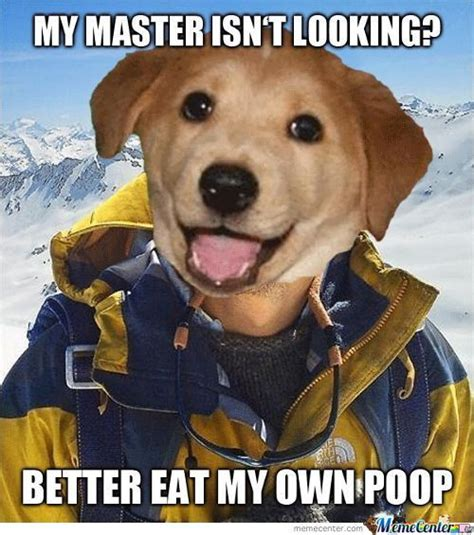 Dog Poop Meme - dog funny poop memes best collection of funny dog funny poop pictures