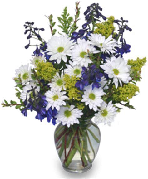 fsn flower of the month – daisy