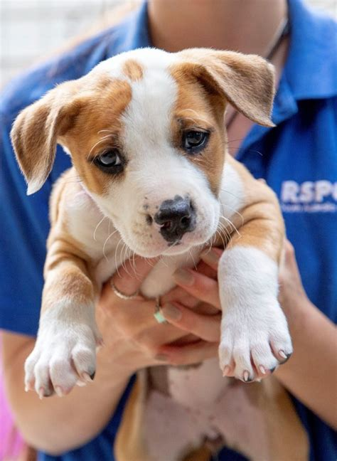dogs rspca south australia