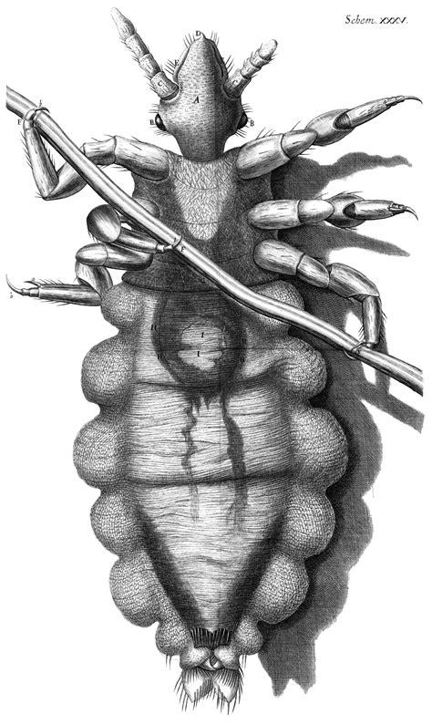 tattoo history source book pdf file louse diagram micrographia robert hooke 1667 jpg