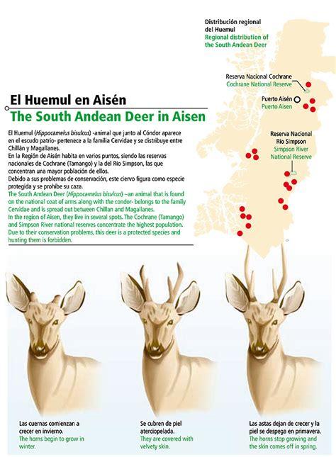 el huemul uno de los representantes del escudo nacional el animal de nuestro escudo patrio icarito
